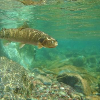 Montana Fly Fishing