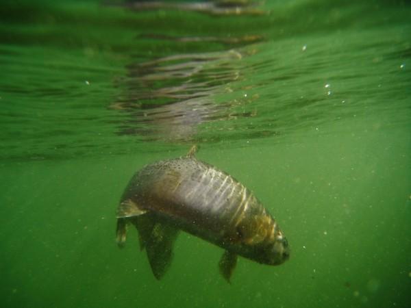 Blog grid montana fishing company for Montana fish company